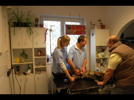 MVDr. Robert Kazarka – Veterinárna ambulancia obr. 3