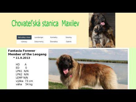 www.maxilev.sk